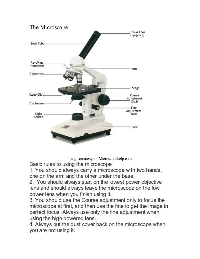 Biology Parts Of A Microscope Worksheet  Schematic And