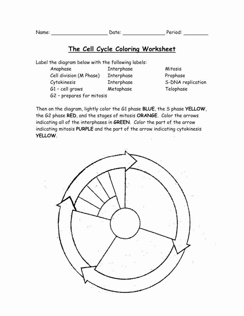 Cells Alive Bacterial Cell Worksheet Answer Key — Dbexcel