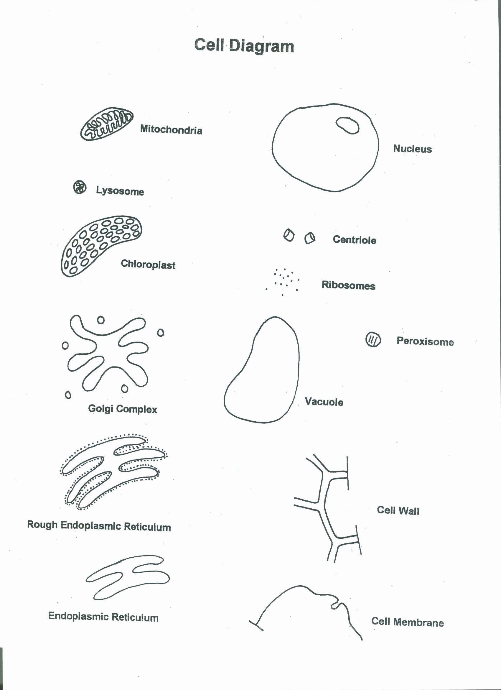 Cells Alive Worksheet Answer Key  Chessmuseum Template