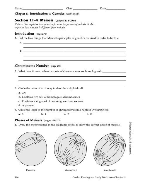 Chapter  Cell Reproduction Worksheet Answers