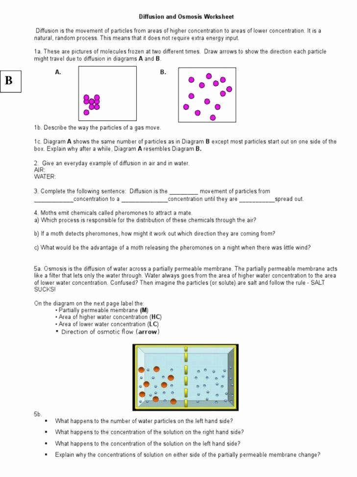 Diffusion And Osmosis Worksheet  Chessmuseum Template