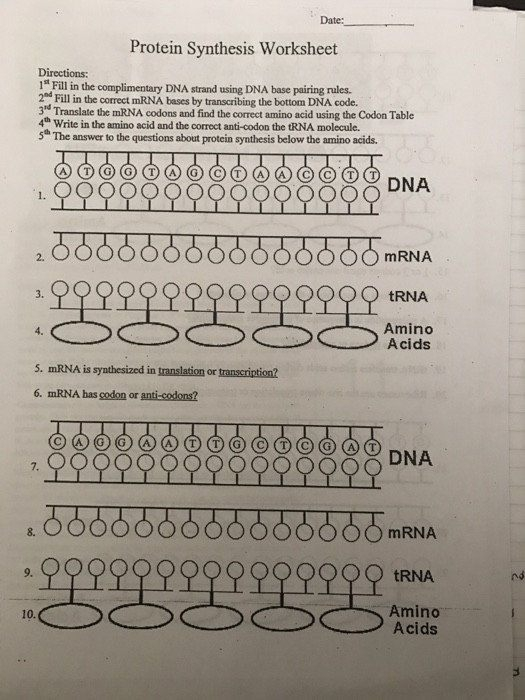 Dna Base Pairing Worksheet Answers Solved Date Protein