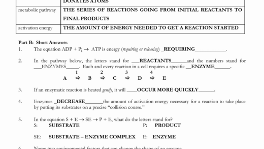 Enzyme Reactions Worksheet Answer Key  Chessmuseum