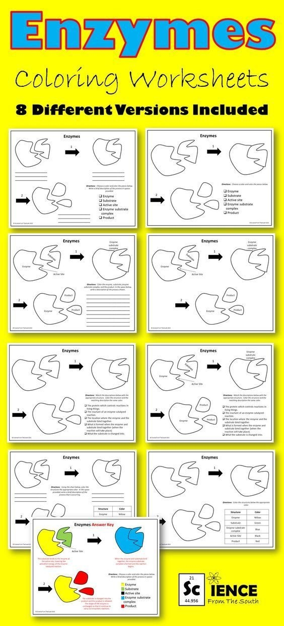 Enzymes Coloring Worksheets With  Differentiated Versions