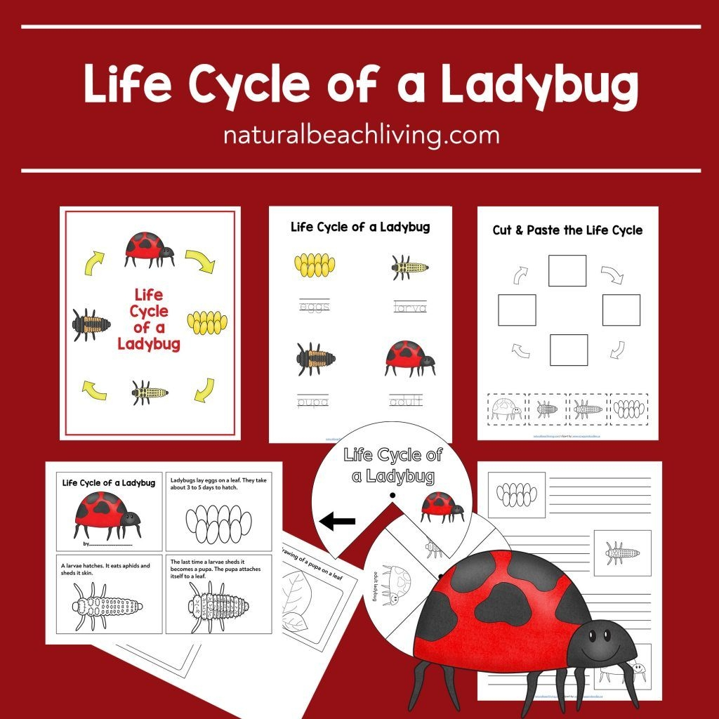 Ladybug Life Cycle Lesson Plans And Activities  Natural