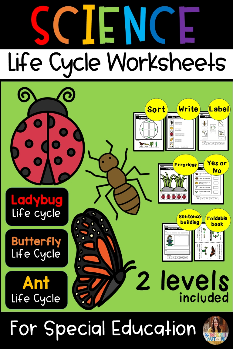 Life Cycle Worksheets For Special Education  Special