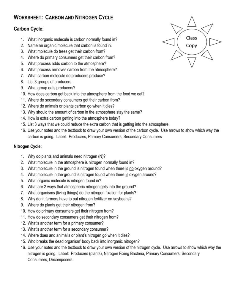 Worksheet Carbon And Nitrogen Cycle — Dbexcel
